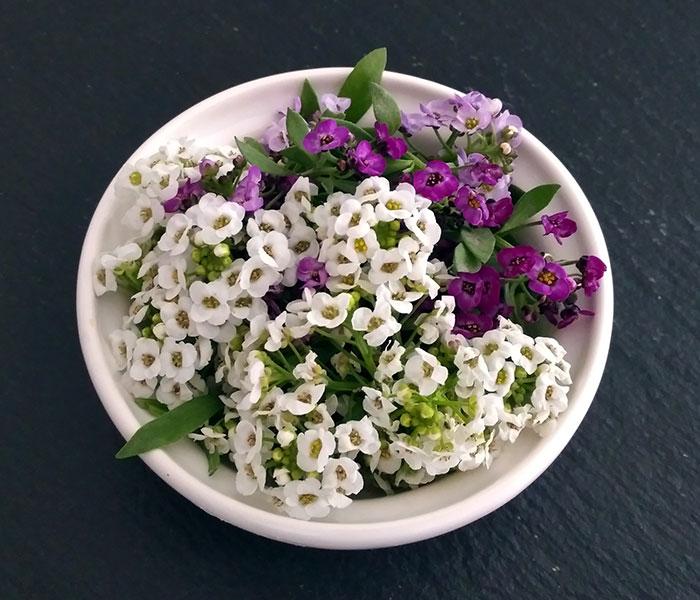 Nos fleurs comestibles. Alysson maritime
