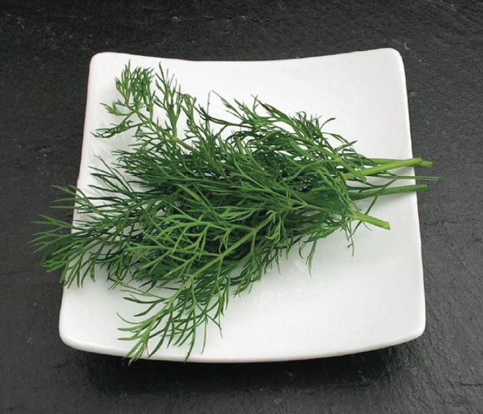 Catalogue Marius Auda Herbes Aromatiques