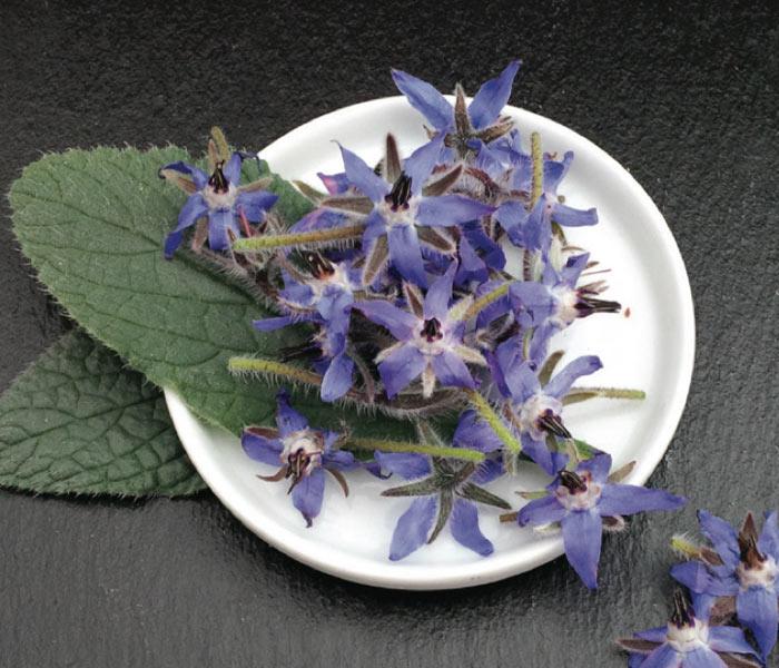 Catalogue MARIUS AUDA - Fleurs Comestibles