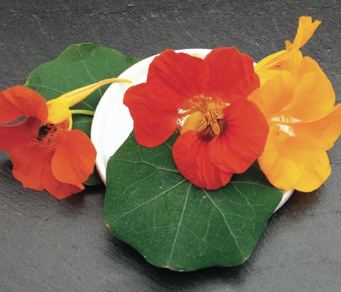 catalogue marius auda fleurs comestibles. Black Bedroom Furniture Sets. Home Design Ideas