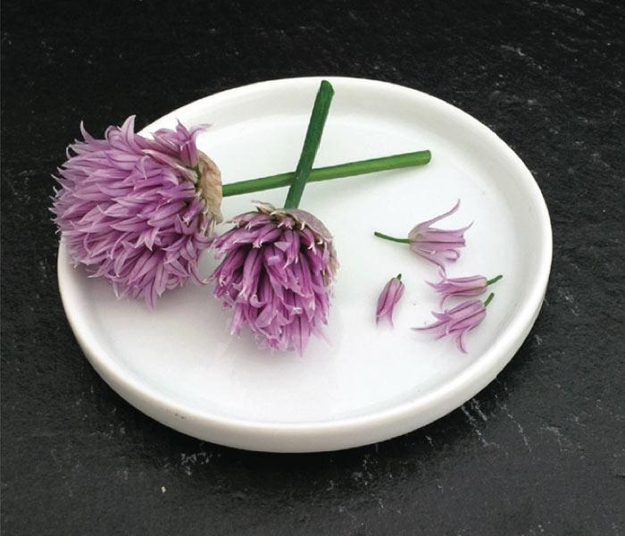 Fleurs de ciboulette