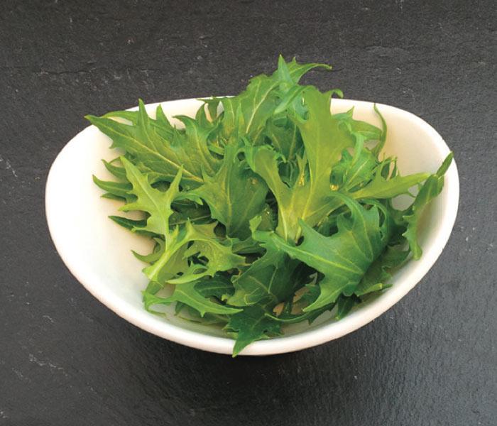 Catalogue marius auda jeunes pousses de salade - Variete de salade d hiver ...