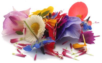 De nombreuses fleurs peuvent être cultivées pour leur beauté mais aussi  pour leur goût délicat. Manger des fleurs n\u0027est pas une invention de la  nouvelle